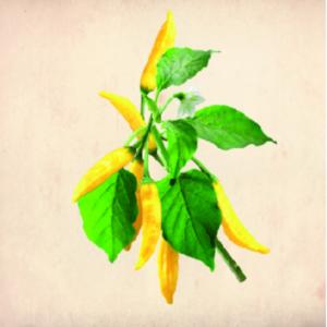 BrygBrygBryg-Lemon-Drip-2021